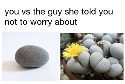 you vs lithops
