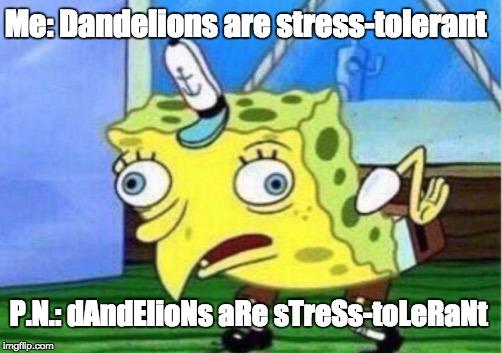 mocking Spongebob.jpg