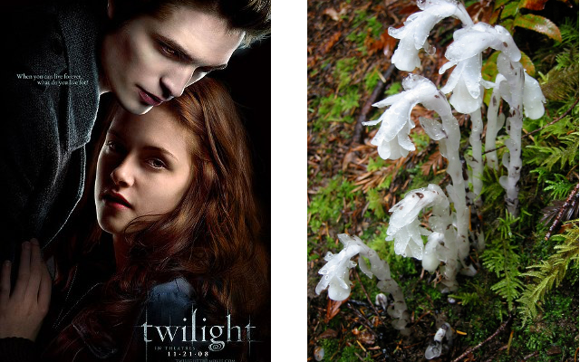 twilight joke 1