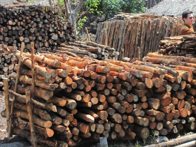mangrove timber.jpg