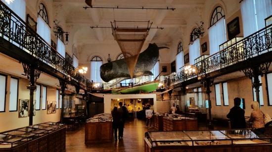 oceanographic-museum.jpg